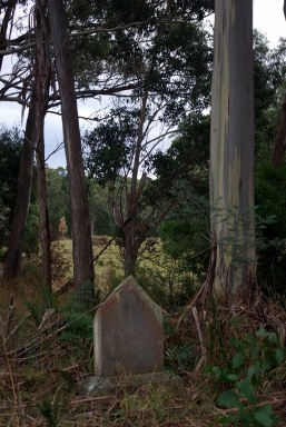 Almost lost in the bush.