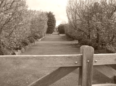 Formal garden paths at the former community gardens