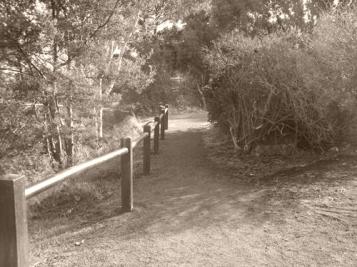 Walking trail at Lake Dulverton