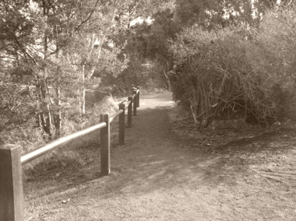 Walking trail at Lake Dulverton