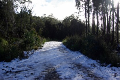 One of the forestry tracks.