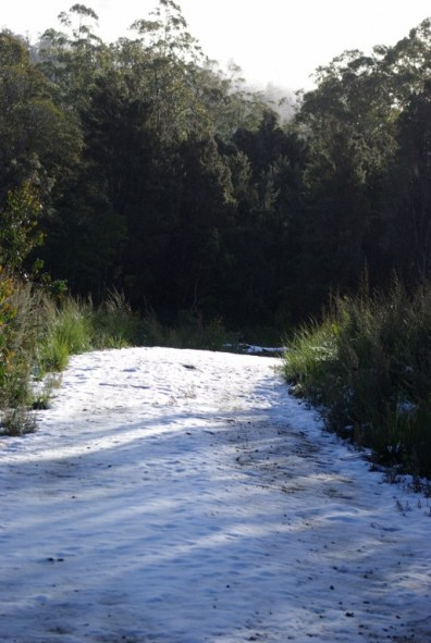 Untouched snow.