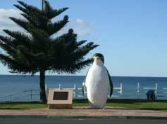 Penguin, photo by Naomi