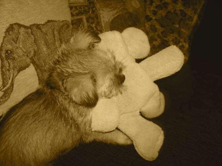_copie-0_Teddy's Toy