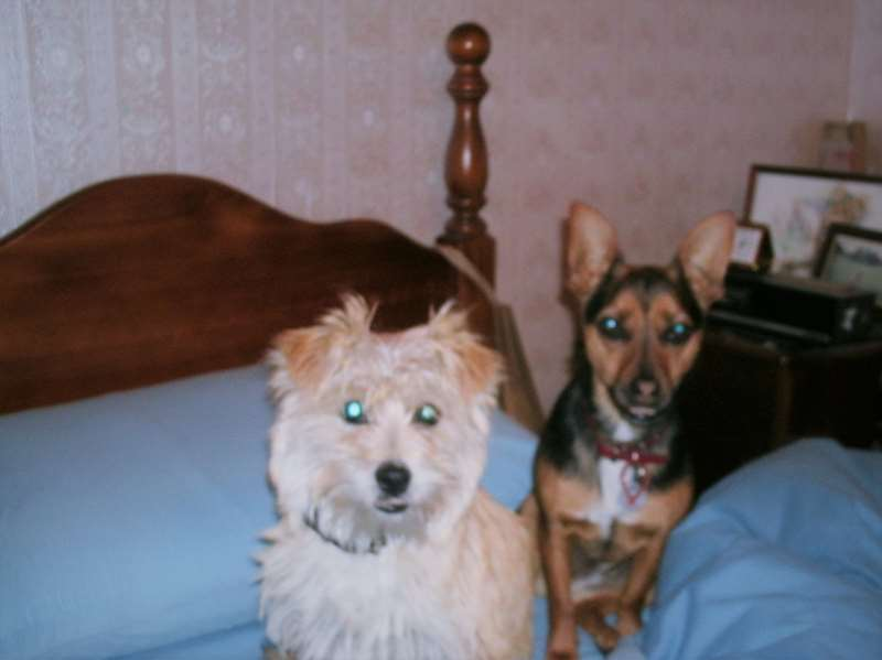 _copie-0_Toby & Teddy waiting to go to bed