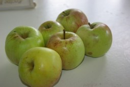 After getting no apples last year it looks as if I will have lots this year.