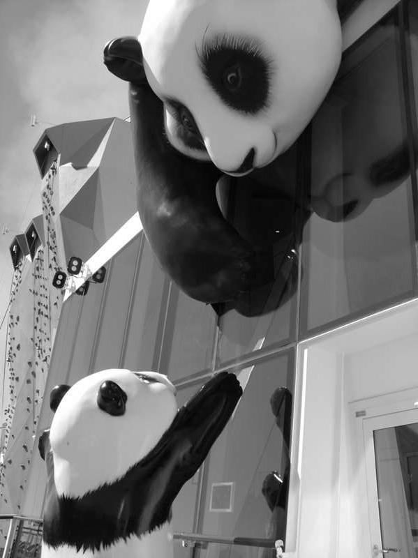 Kung Foo Panda and Baby