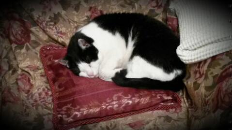 RDP #72 Cat