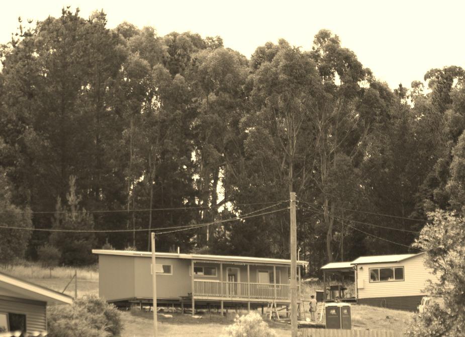 Cee's Black & White Photo Challenge:Trees