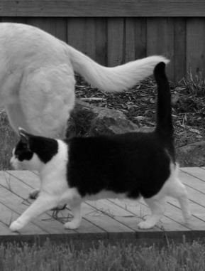 Cee's Black & White Photo Challenge: Tongues and Tails