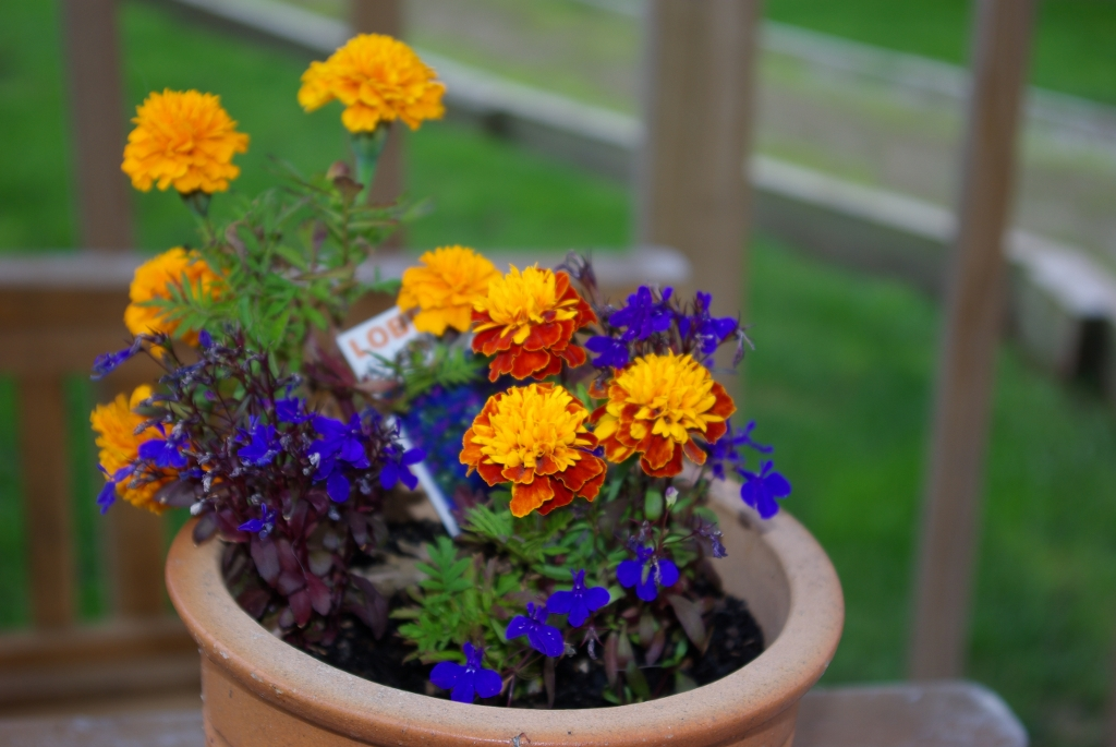 Potted Blooms (2)