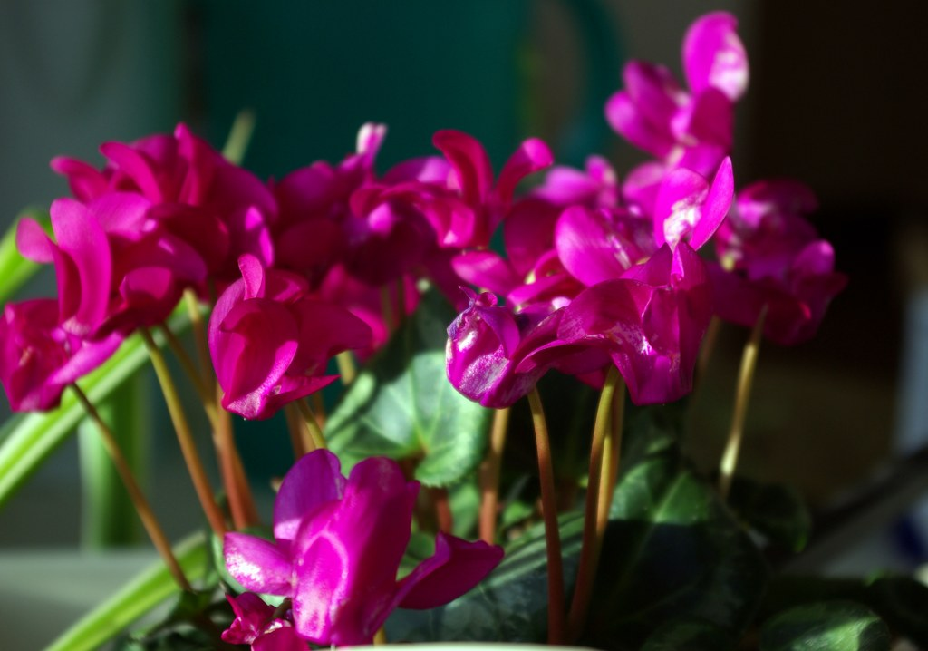 A Photo A Week Challenge: Shades of Pink