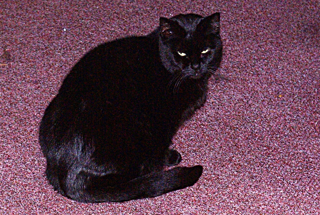 Panther is Naomi's other cat.